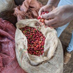 ca-phe-ethiopia-koke-natural